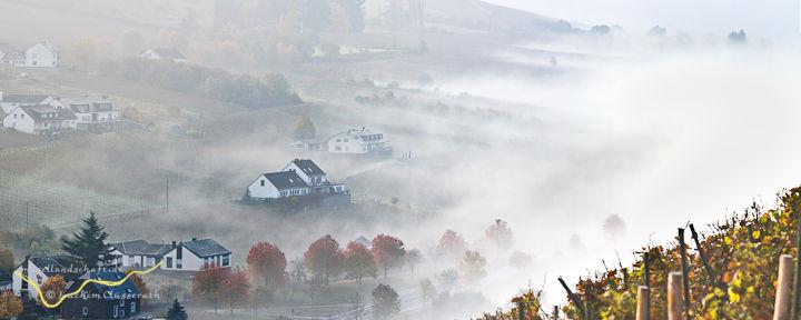 Die Weinlage Burger Schlossberg im Morgen-Nebel als Panorama-Fotografie